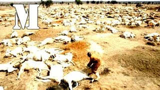 History List: Most Devastating Famine and Droughts Throughout History