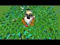 MON ARMÉE DE ZOMBIES !   Minecraft