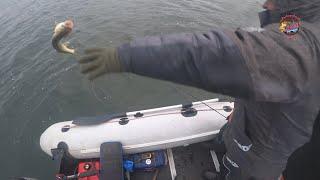 Не дня без рыбалки! Закрепление вчерашнего успеха по ловли щуки в декабре на ДЖИГ