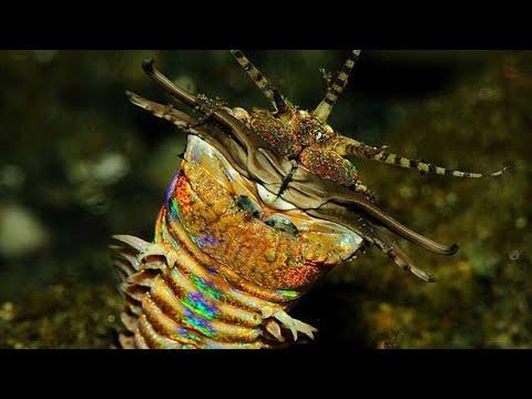 Conoce al depredador más inquietante del océano