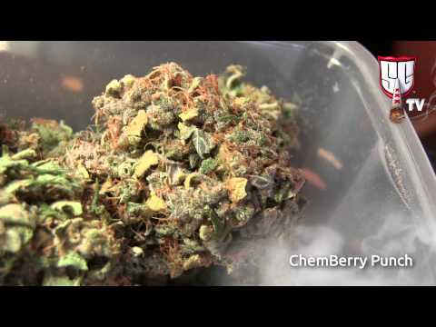Organic Cannabis Specialists: Betty Boop Coffeeshop Amsterdam Tour - Smokers Guide TV Amsterdam