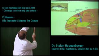 Pottwale - Die lauteste Stimme im Ozean // Forum Fachdidaktik Biologie 2015 // Universität zu Köln