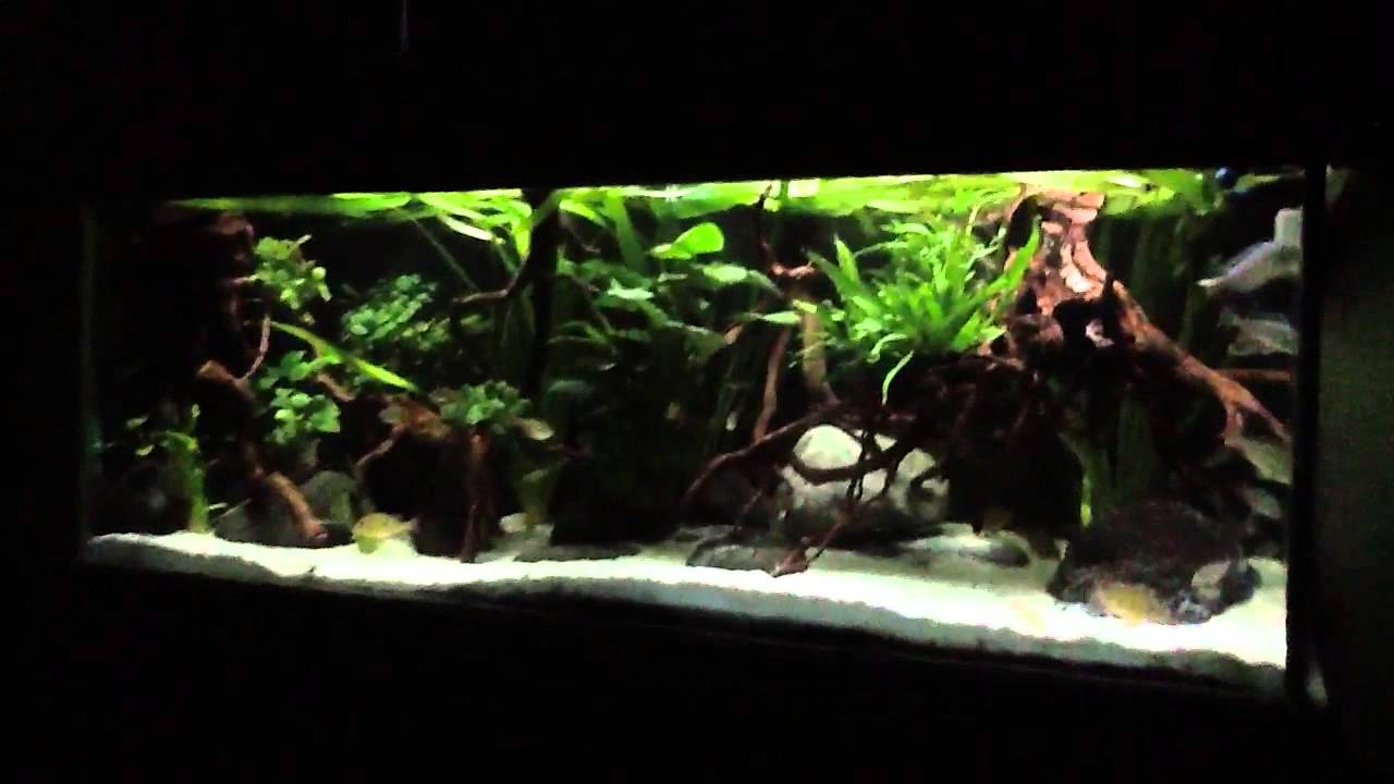 South American Aquarium 22feb2013 Youtube