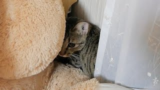 うちの猫、何か変なんです...