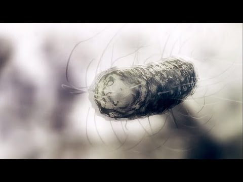 What Is The Smallest Organism On Earth? | Wonders of Life w/ Prof Brian Cox | BBC