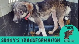Terrified dog gets amazing transformation  Sunny  Takis Shelter