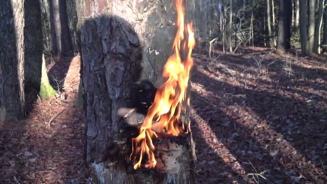 how to start a forest fire youtube. Black Bedroom Furniture Sets. Home Design Ideas