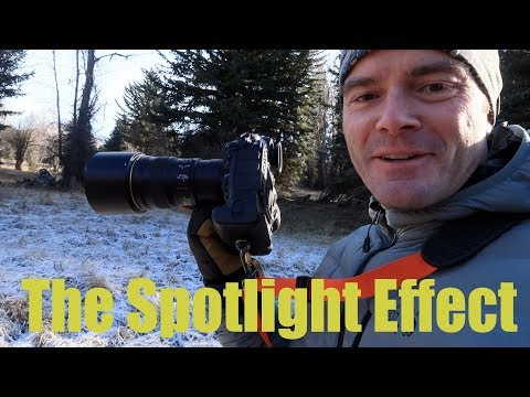'The Spotlight Effect'  - Photographing an Owl in the Wyoming Woods