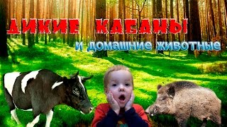 Дикие кабаны, ВАДЯ САМ ДОИТ КОРОВУ,Домашние животные,ТВ,JoyMax,Видео для Детей.ПОДПИСЫВАЙТЕСЬ