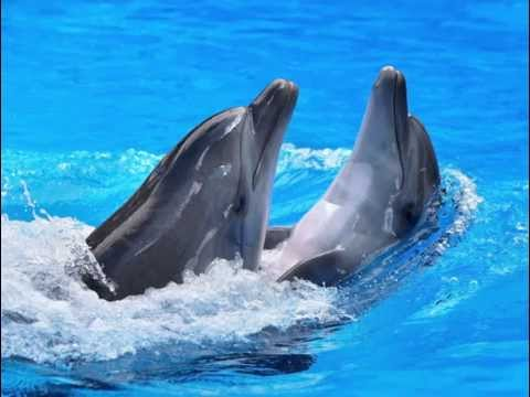 Dolphins: Dolphins Facts for Kids (Types of Dolphins, Bottlenose Dolphins, Dolphins Habitat etc.)