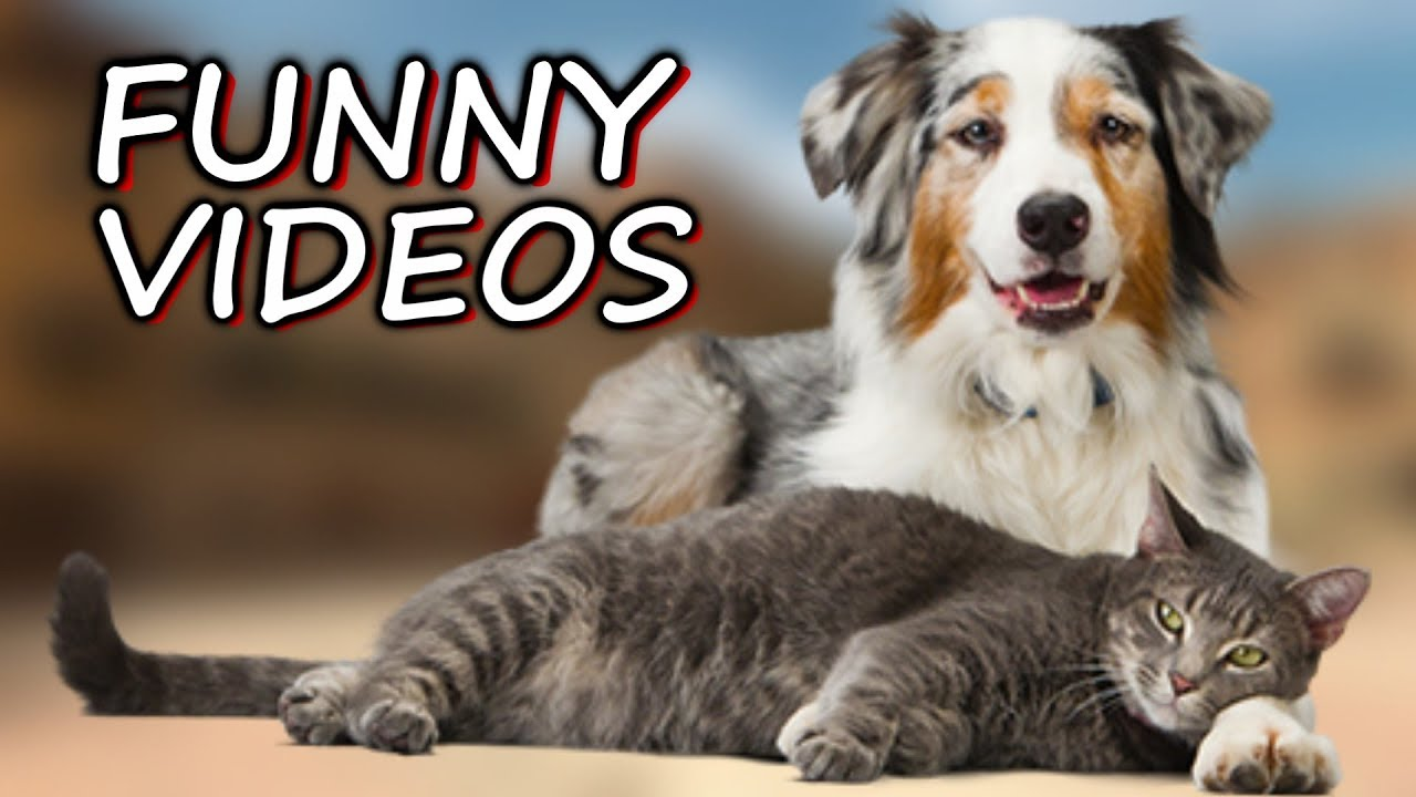 Faze comice cu pisici amuzante si caini haiosi