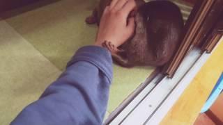 こんにちは!かわうそのおねえさんです☺ コツメカワウソの「ぶーりん」は元気で甘えん坊な女の子☆ 是非、ぶーりんに会いに当店にいらして...