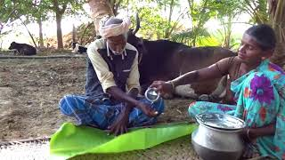 village food factory - Country food in my village | Asian food Pure Cow Milk Payasam
