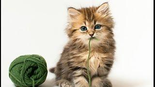 Машинное вязание для начинающих(Машинное вязание для начинающих.Подробный видео курс http://vyzanie.com/Knitting/vyzanie Автором показано как любой начин..., 2014-08-26T19:25:43.000Z)
