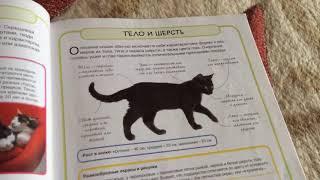 Какие бывают кошки? Обзор кошек №2