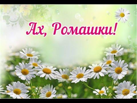 Ах, Ромашки! Луговые цветы - Золотисто-белый дурман…