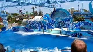 Blue Horizons Dolphin Show - Sea World San Diego [FULL SHOW]
