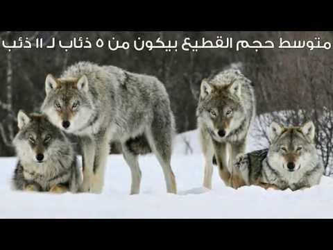5 معلومات شائعة عن الحيوانات
