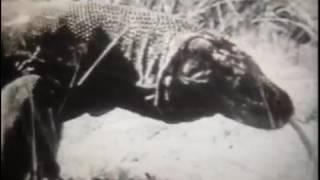 Ящерицы, Из серии  Пресмыкающиеся, 1990 г