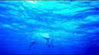 Любовные игры дельфинов