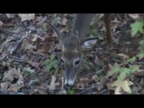 Southern Assassins Outdoors 2016 Peidmont NWR Deer Hunt