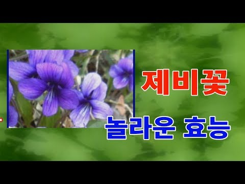 제비꽃의 놀라운효능