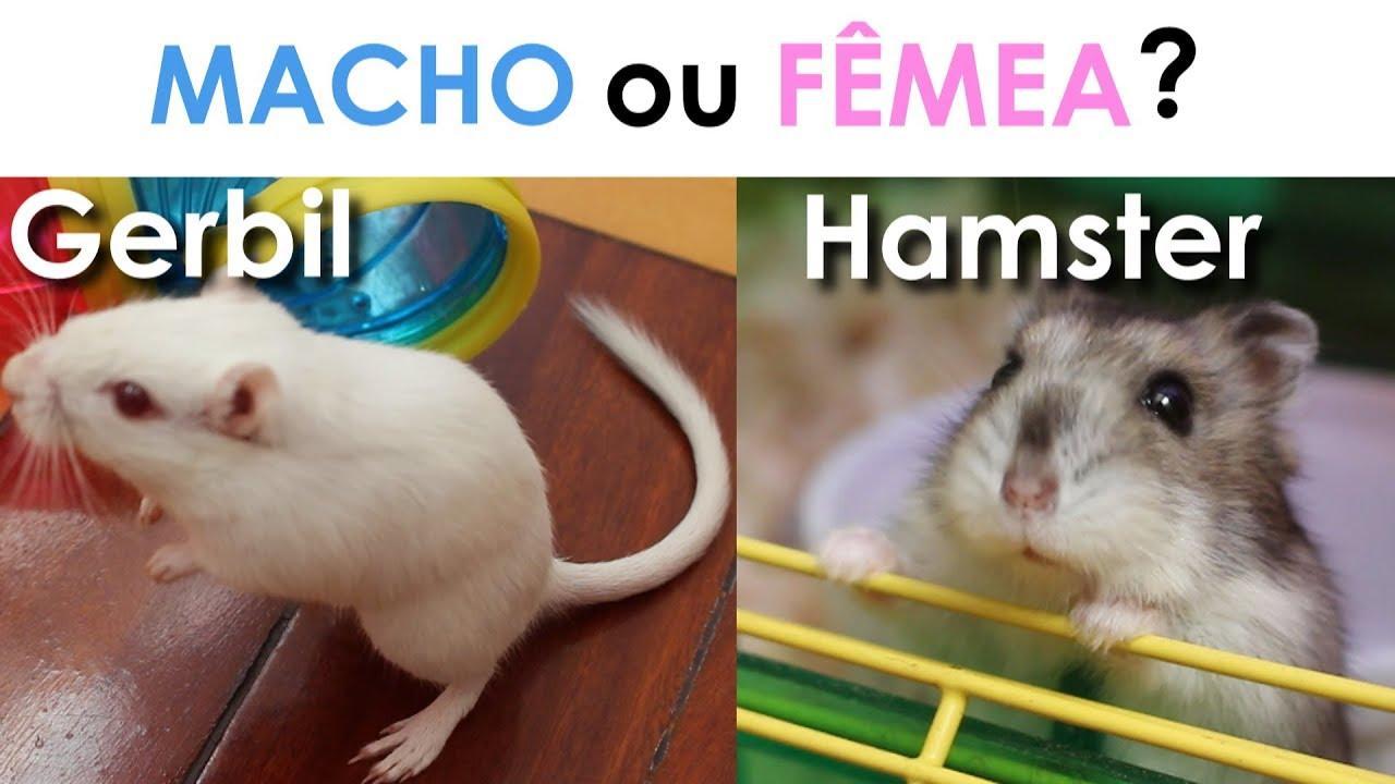 Hamster sex de