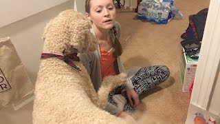 WHAT HAPPENS WHEN BLOOD SUGAR DROPS | Service Dog Alert (3.31.17)