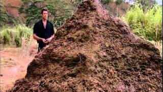 Is big That of one shit pile