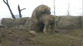 Ik zag 2 beren broodje smeren