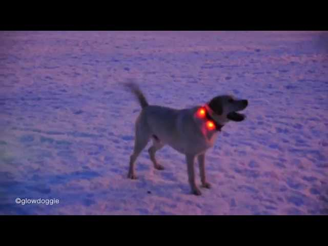 Fun in the park with the Glowdoggie™