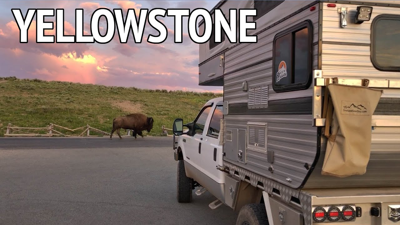Looking for Grizzlies at Yellowstone National Park