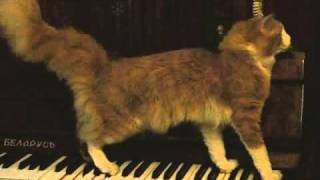 Luciano. Кот - пианист. Cat-Pianist.