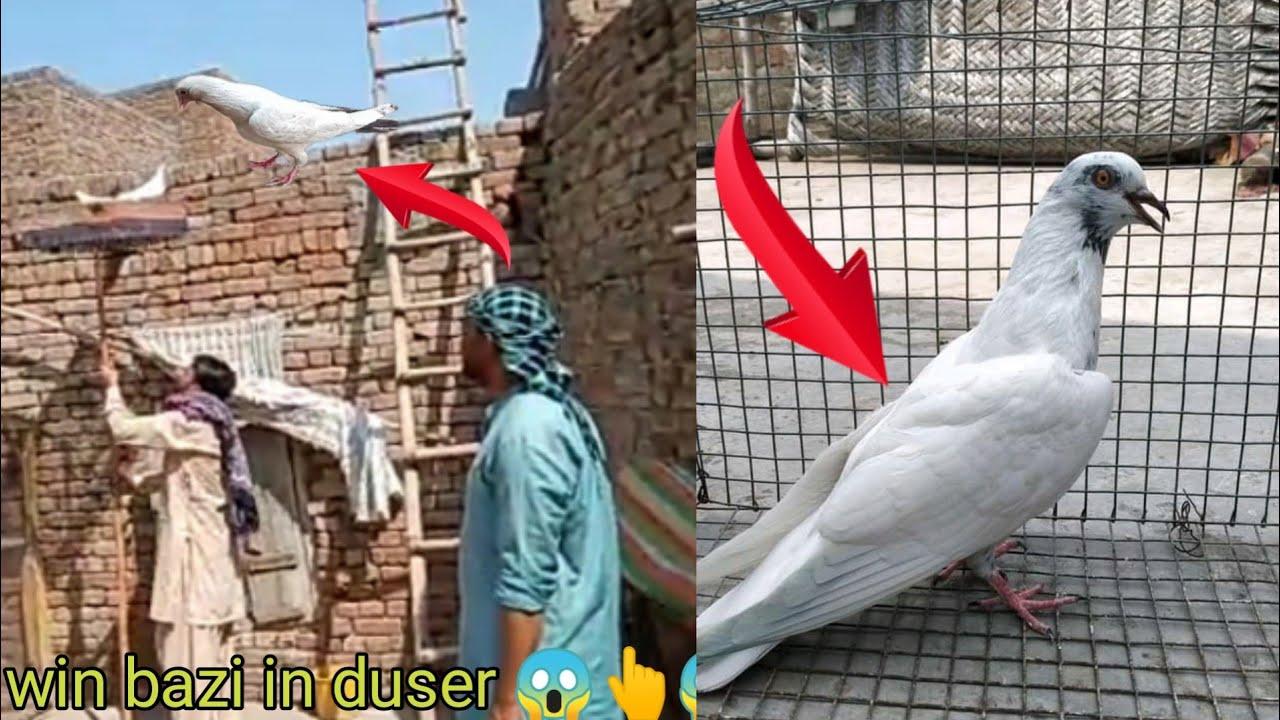 2 ser pai win bazi 3:00pm 😱😱 kabootar bazi 2021    faisalabad pigeon
