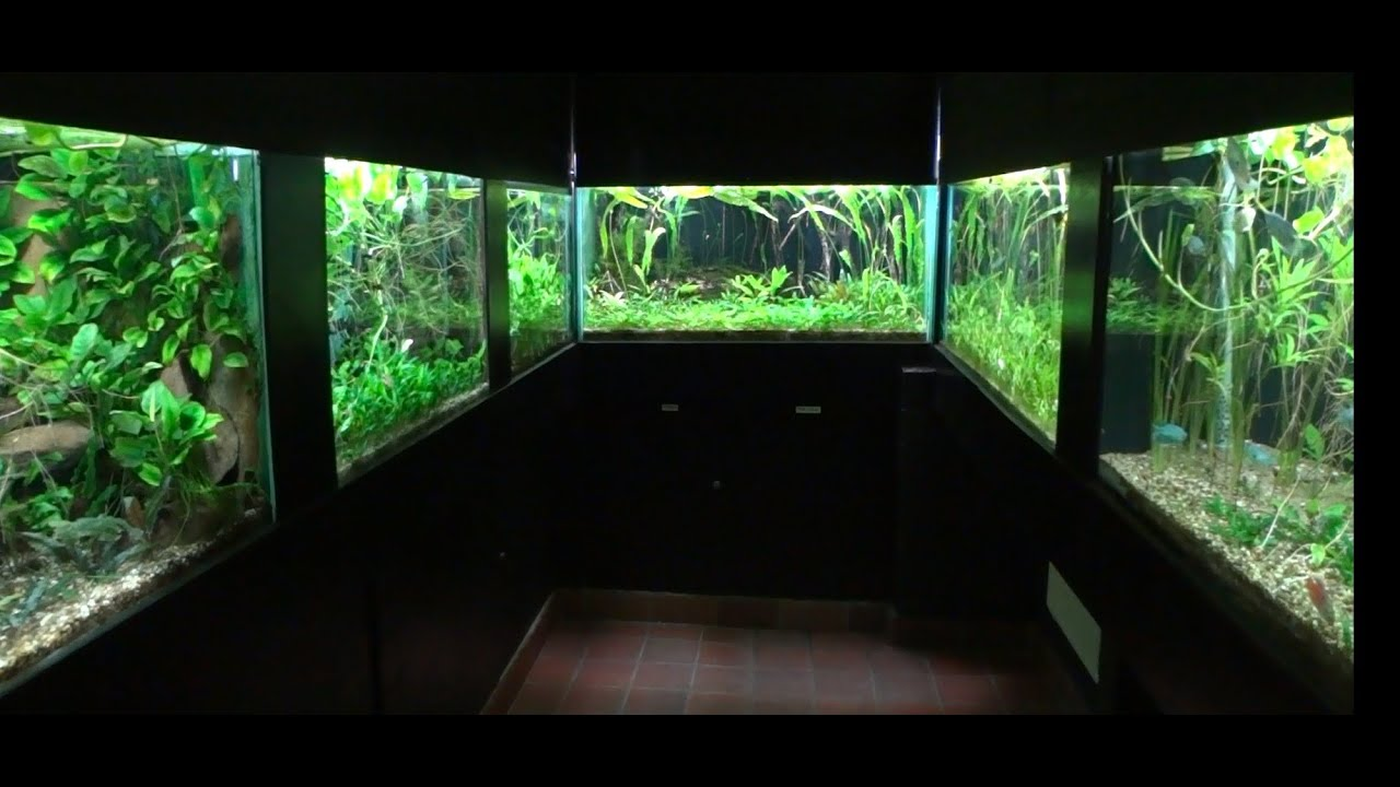 Aquascape Ideas / Biotops - YouTube