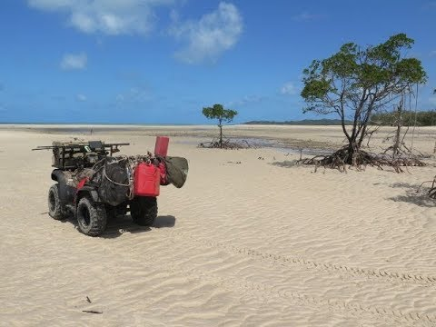 More Beach Boars From Cape York