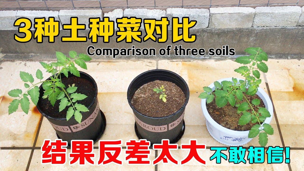 沙土、椰糠、营养土,哪种土种菜效果更好?结果的反差太大,新手谨慎用土!|Comparison of vegetable planting effects in three soils