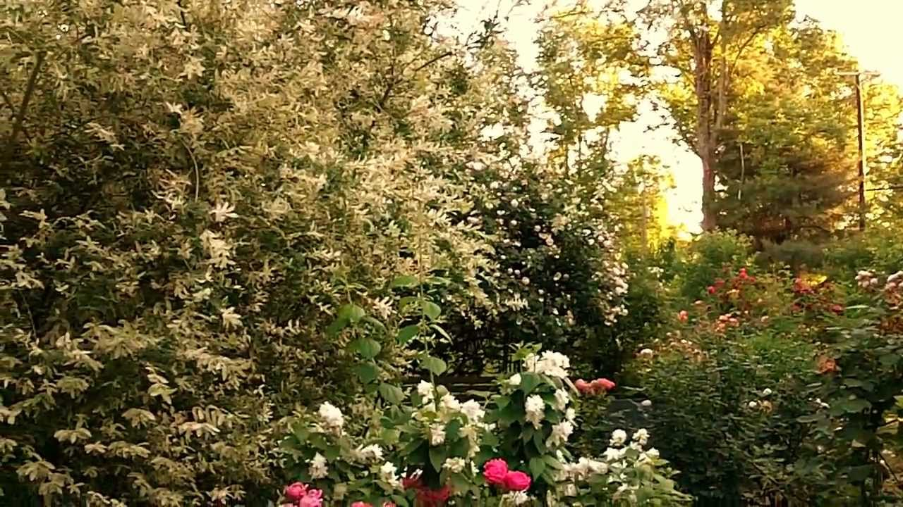 English cottage style garden - YouTube