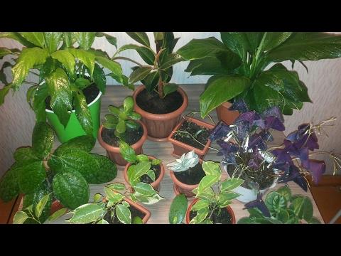 комнатные растения с мусорки