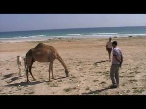 Oman - Yemen
