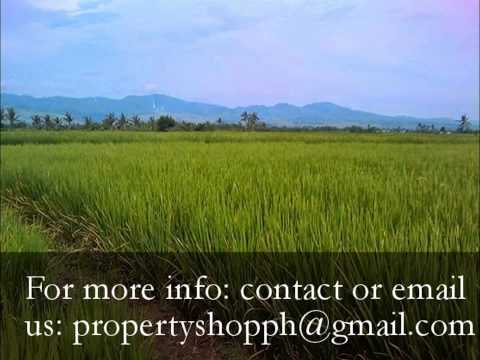 For Sale 1 hectare rice field