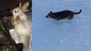 Аномальные Холода Казахстане ,замерзли животные