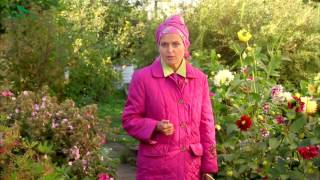 Как собрать семена цветов осенью - 7 дач