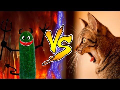 Смешные коты » Видео приколы - смотрим бесплатно онлайн