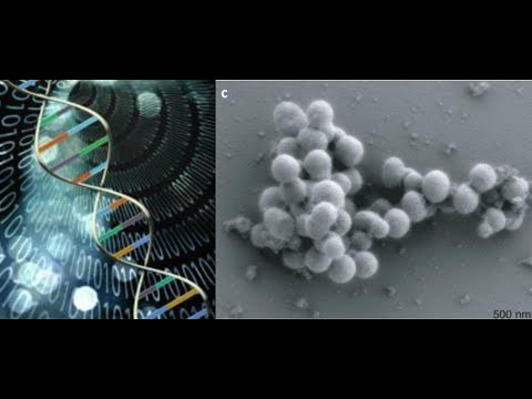 Scientists Create Self Replicating DNA Computers & Spread Computer Virus in Human DNA
