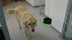 Hundezentrum Wien - Hundekompetenzzentrum, Hundetagesstätte, Hundeschule