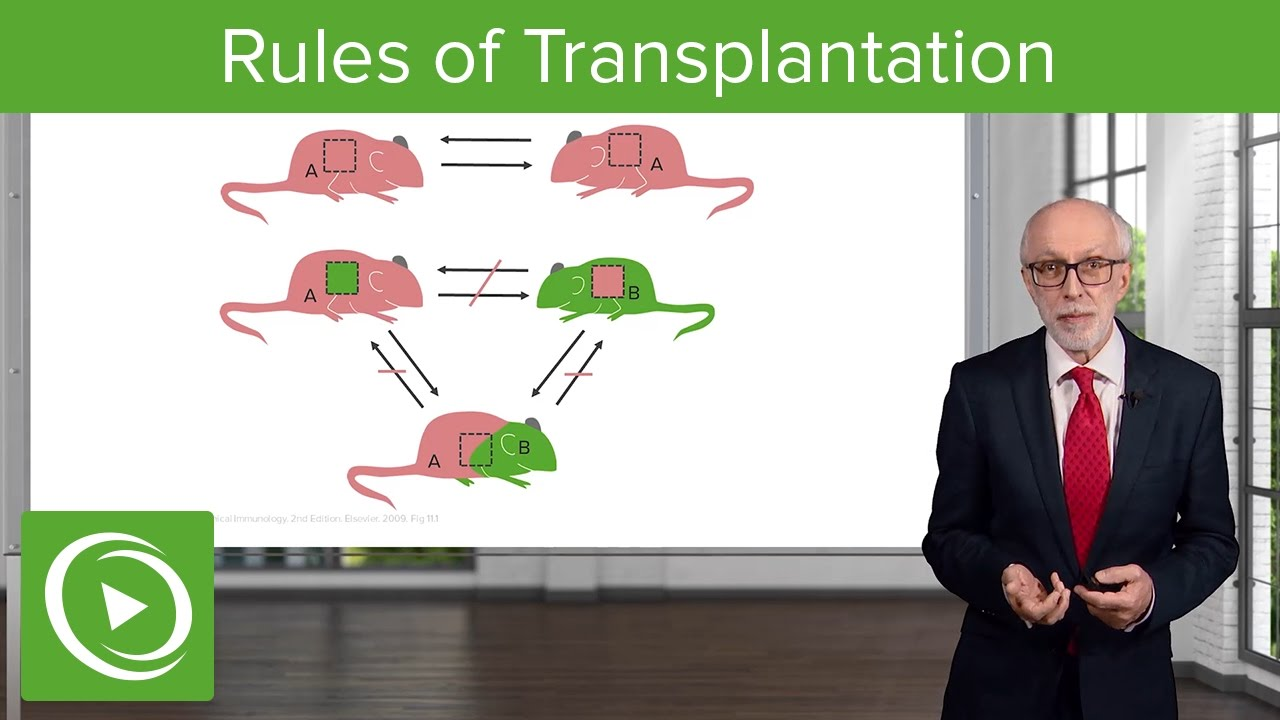 Introduction to the Problems and Rules of Transplantation – Immunology | Lecturio