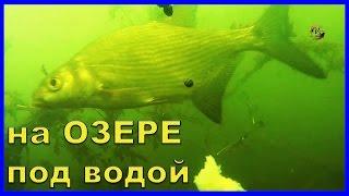 На Озере. Подводные съемки при ловле на поплавок. Рыбалка. Fishing(На Озере. Подводные съемки при ловле на поплавок. Рыбалка.….((Мой канал- это (в основном) канал ЛЮБИТЕЛЯ-рыбол..., 2016-07-27T11:00:10.000Z)