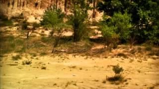 Csodabogarak - Hangyák (1.évad 2.rész)
