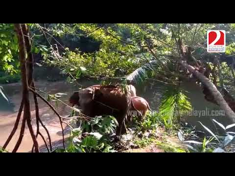 Elephant rescue from well- kothamangalam I Marunadan Malayali